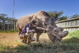Me with Sudan in February 2016 in the Ol Pejeta Conservancy in Kenya.