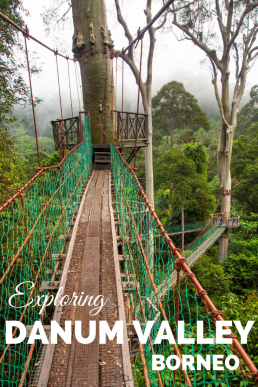 Danum Valley offers the most authentic wildlife encounters in Borneo, and it's the best place to see the rare pygmy elephants. Famous canopy walkway gives a bird-eye view to the most complex ecosystem in the world: the primary rainforest, the home of truly wild orangutans. #Borneo #Malaysia #DanumValley