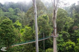 Danum Valley's canopy walkway in the morning mist, Sabah, Malaysian Borneo