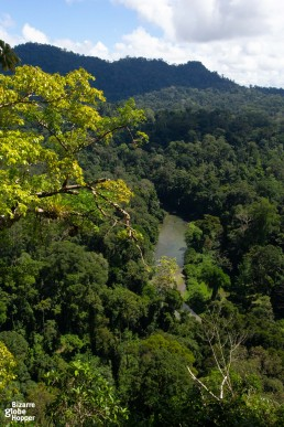 View to Borneo's primary rainforest from Viewpoint Hike, Danum Valley
