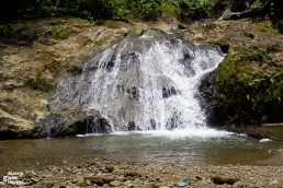 Jacuzzi pool in Danum Valley: free fish massage in-between rainforest hikes.