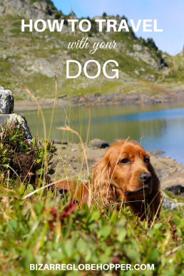 How to travel with your dog: tips and tricks for traveling dog owners. How to pick dog-friendly destinations, hikes, and activities and what to pack for your pooch. #travel #dog #dogstuff #dogtravel