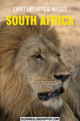 Expat life highs and lows in South Africa with useful tips for South African visa renewal, safaris, and getting used to the African lifestyle. #SouthAfrica #expat #Africa