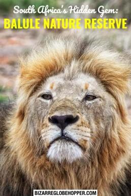 Balule Nature Reserve: a hidden gem in Greater Kruger National Park, South Africa. Remote Big Five safari destination for both budget and luxury safaris.