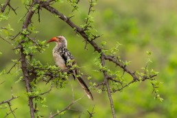 Balule Nature Reserve has outstanding birding thanks to Olifants River