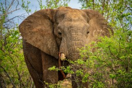 Private reserves in Greater Kruger allow off-roading for the best wildlife encounters