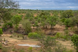 Waterhole for watching wildlife in Sausage Tree Safari Camp in Balule Reserve, Greater Kruger National Park
